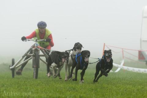 Hundewagenrennen Thalheim ZH